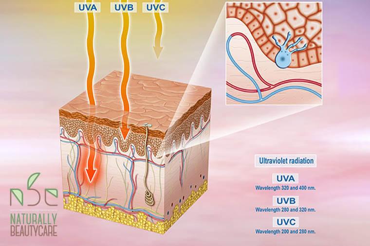 UVA-UVB-UVCRays-1
