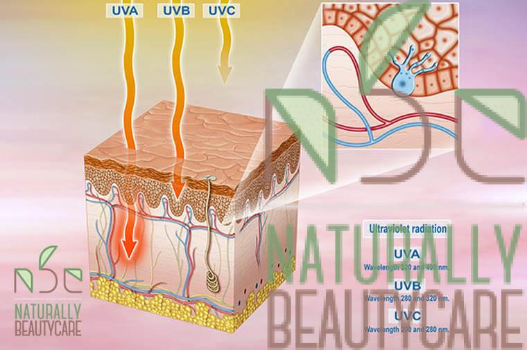 UVA-UVB-UVCRays