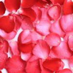 rose-petals-beauty-tips